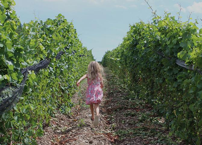 Route des vins du comté de Prince Edward en Ontario