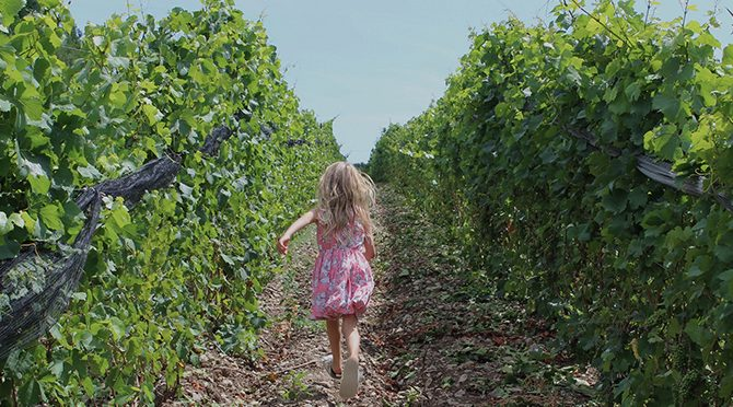 Discovering the Wineries of Ontario, Part 2: Prince Edward County
