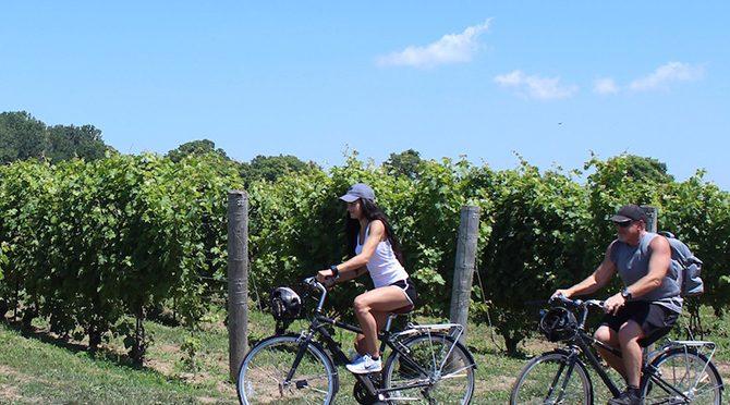Visite à vélo des vignobles de Windsor, en Ontario