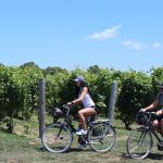 Discovering the Wineries of Ontario, Part 1: Windsor-Essex