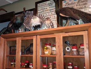 La collection d'embryons d'animaux du musée Sam Waller de The Pas, au Manitoba, dont une truite à deux têtes, un loup et un caribou