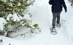 Snowshoeing by a tree, Nova Scotia Vacation, kids activities, winter season