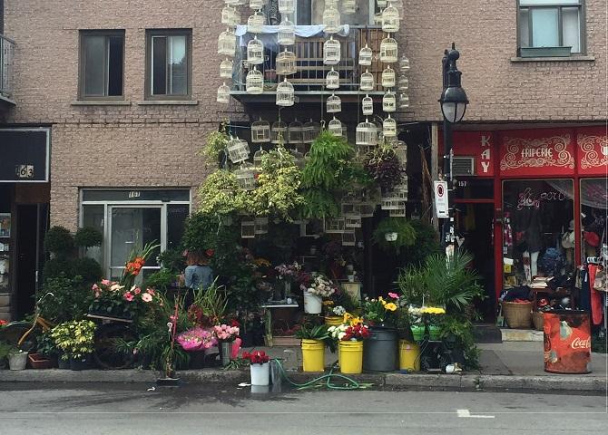 The Dragon Flower, Mile End, fleuriste et cages d'oiseaux, Visiter montréal, Que faire à Montréal,