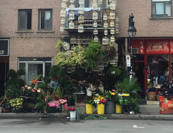 Dragon flowers, mile end, flower shop with birdcages, Montreal attractions, Fun things to do in Montreal, Plateau mont royal