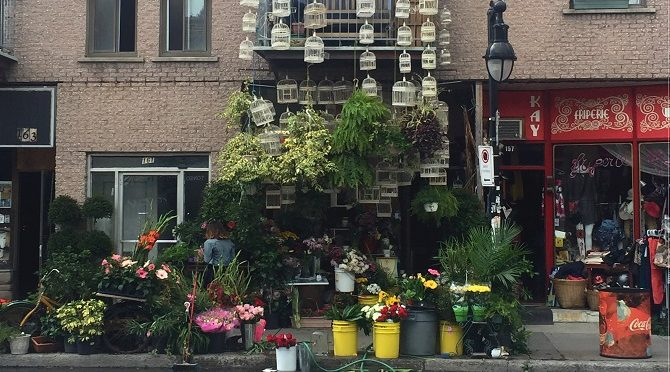 Fun Things to do in Montreal:  Plateau Mont-Royal