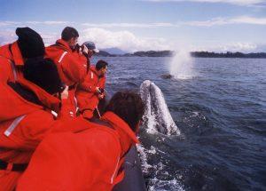 Canada 150, voyage aventure, quoi faire à Vancouver