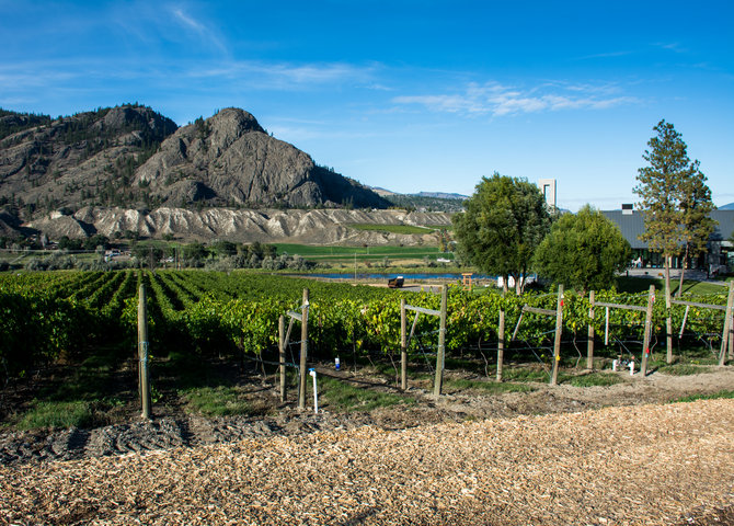 Le vignoble Monte Creek (©Tourism Kamloops)