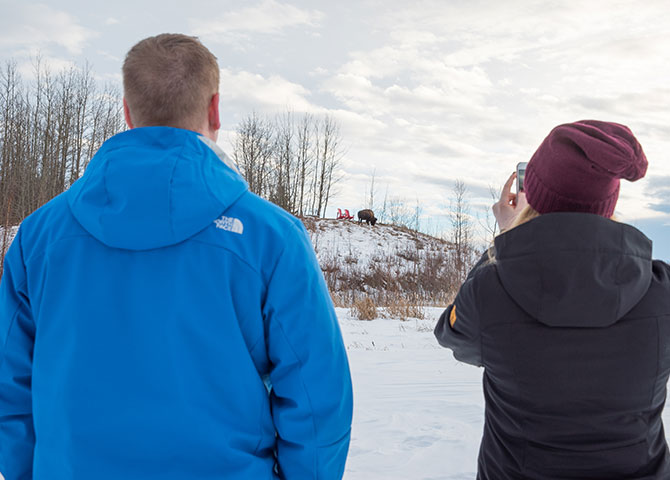 Passer un journée à observer les animaux du parc nationale Elk Island. (©EEDC)