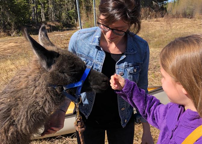 A fuzzy llama friend!