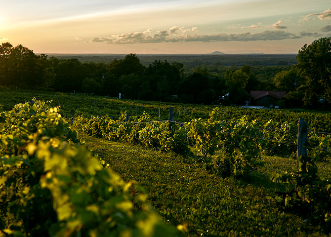 Sip your way across several wineries in the Eastern Townships (© Pétéphotographie)