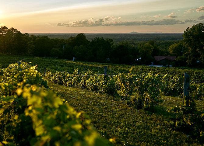 Siroter des vins de différentes régions des Cantons-de-l'Est (© Pétéphotographie)