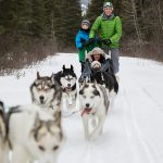 Dog Sledding Holidays in Canada