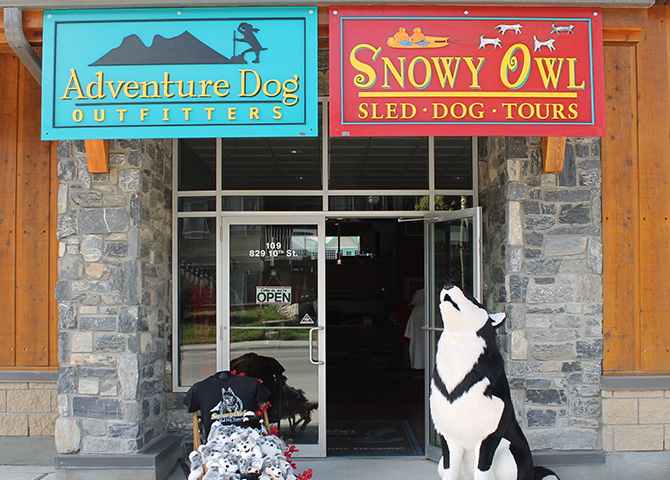 Snowy Owl Sled Dog Tours à Canmore en Alberta.